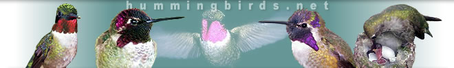 Hummingbirds logo